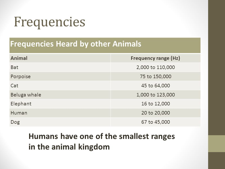 Frequencies Frequencies Heard by other Animals AnimalFrequency range (Hz) Bat2,000 to 110,000 Porpoise75 to 150,000 Cat45 to 64,000 Beluga whale1,000 to 123,000 Elephant16 to 12,000 Human20 to 20,000 Dog67 to 45,000 Humans have one of the smallest ranges in the animal kingdom