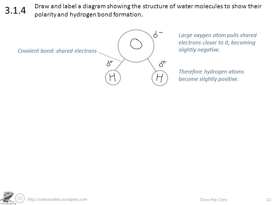 draw the core label if you re able annotate if you re great stephen rh slideplayer com draw a labelled diagram showing the structure of a typical virus draw a labelled diagram showing the structure of a motor neuron