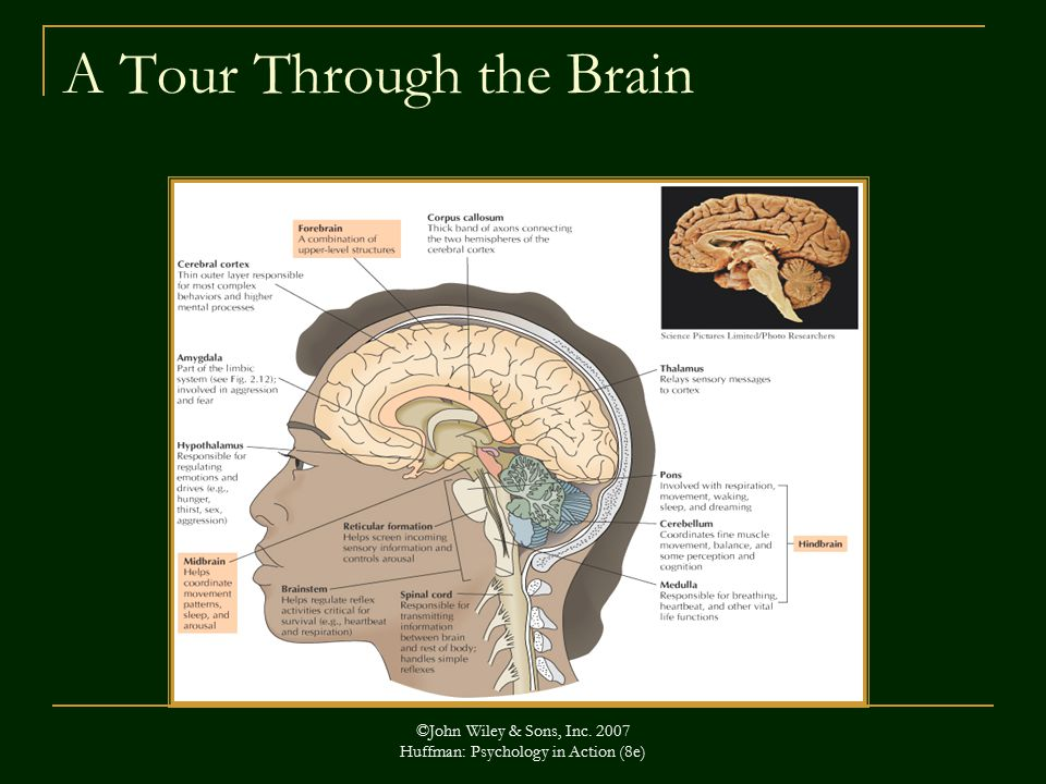 ©John Wiley & Sons, Inc Huffman: Psychology in Action (8e) A Tour Through the Brain