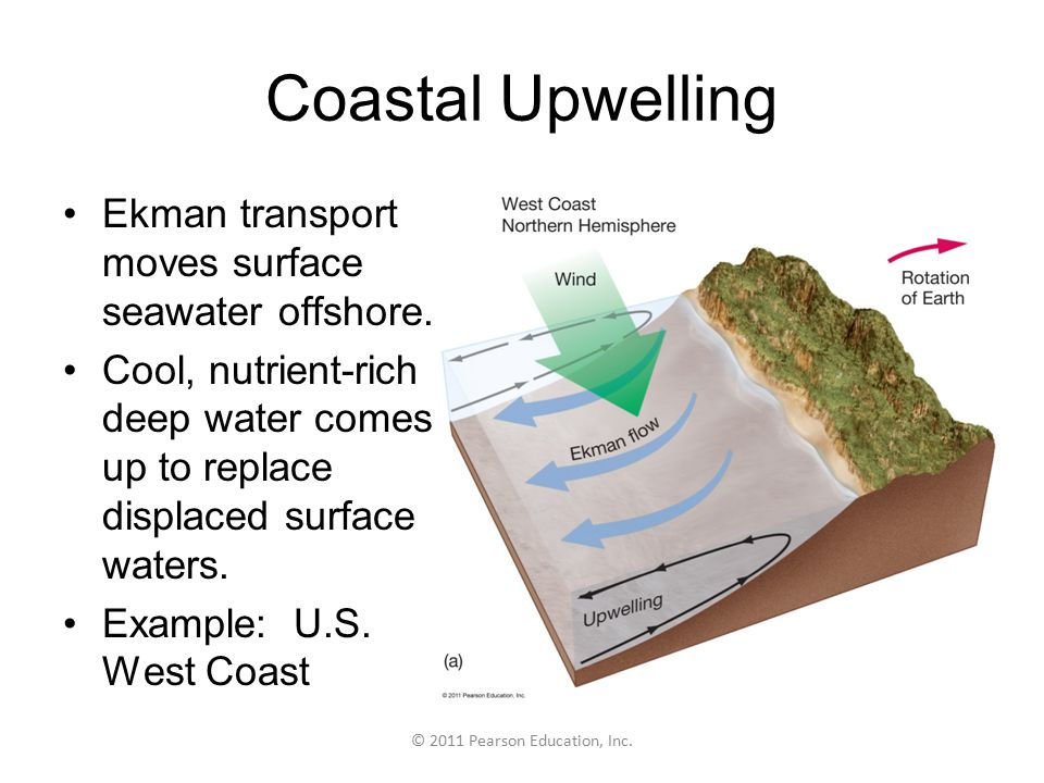 © 2011 Pearson Education, Inc. Coastal Upwelling Ekman transport moves surface seawater offshore.