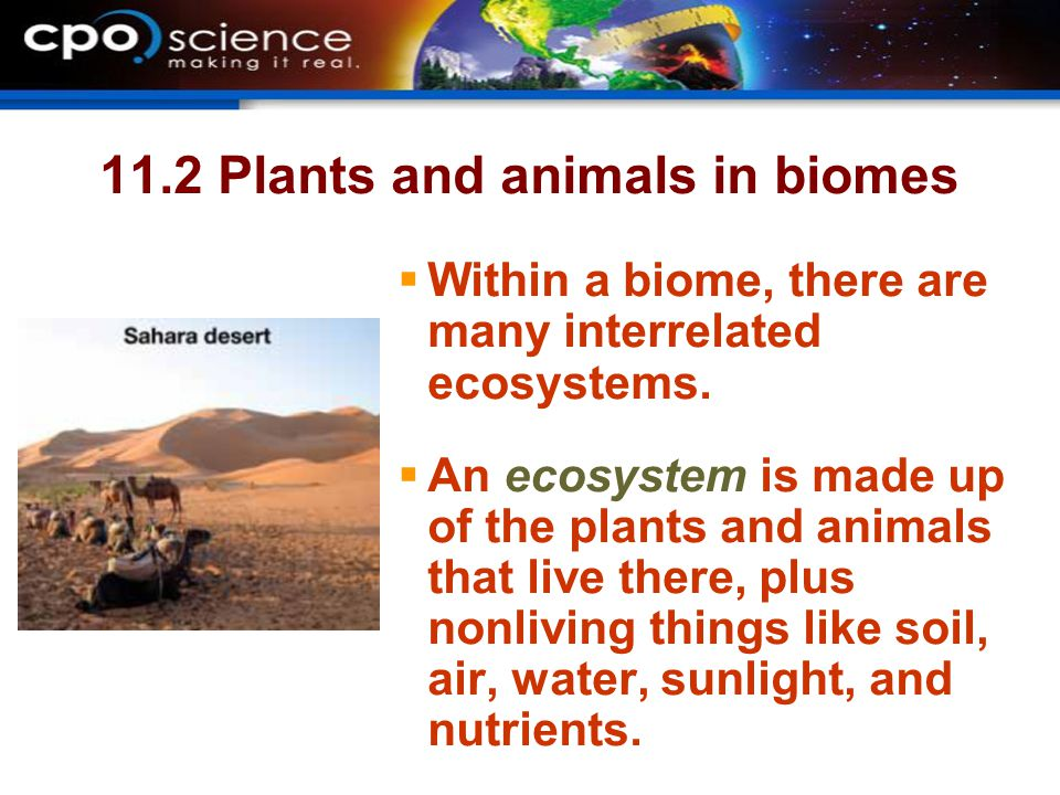 11.2 Plants and animals in biomes  Within a biome, there are many interrelated ecosystems.