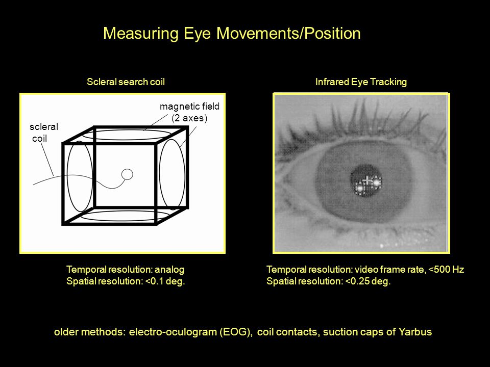 Physiology and Psychophysics of Eye Movements 1.Muscles and (cranial ...