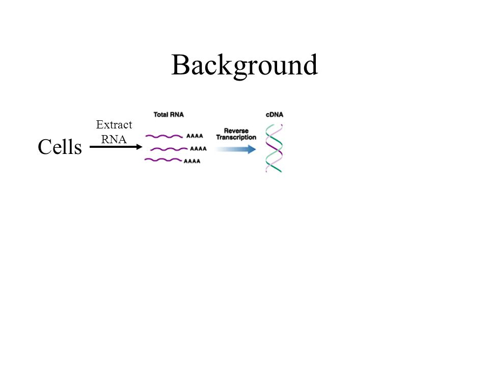 Background Cells Extract RNA