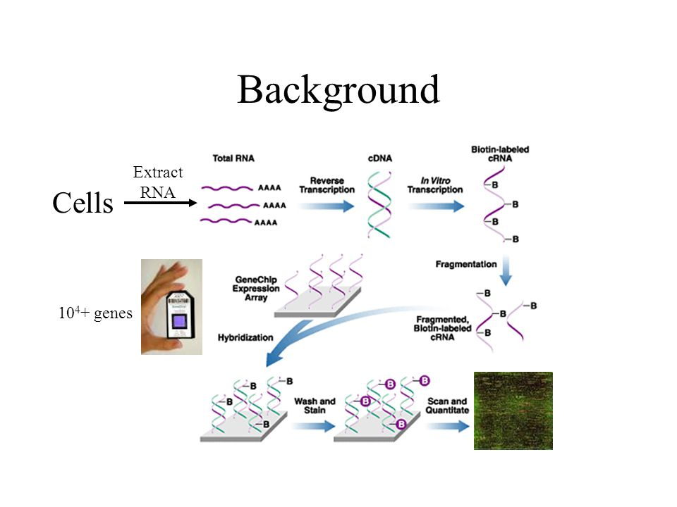 Background Cells Extract RNA genes