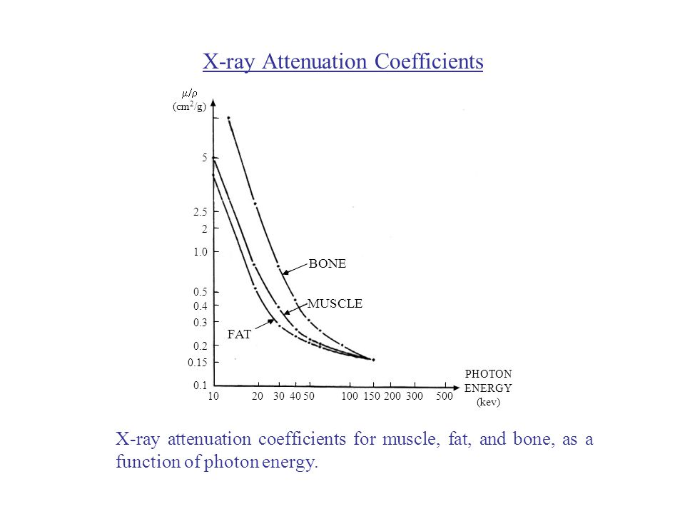 X-ray Attenuation Coefficients FAT MUSCLE BONE PHOTON ENERGY (kev)  (cm 2 /g) X-ray attenuation coefficients for muscle, fat, and bone, as a function of photon energy.