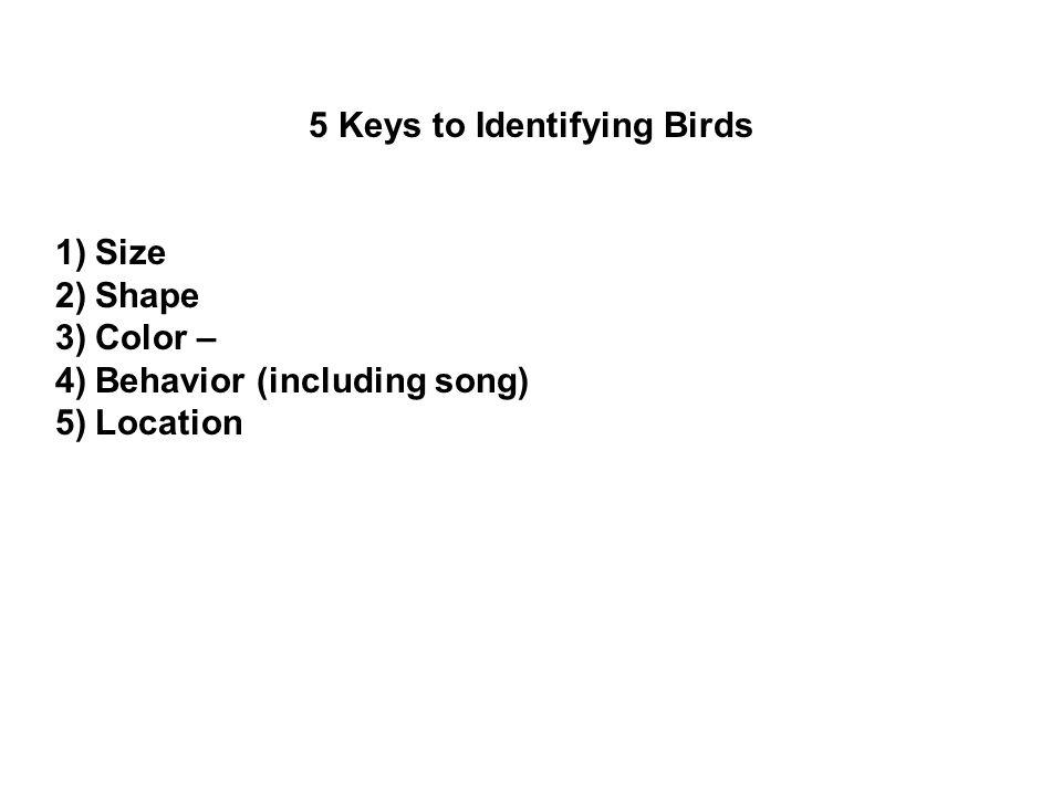 5 Keys to Identifying Birds 1)Size 2)Shape 3)Color – 4