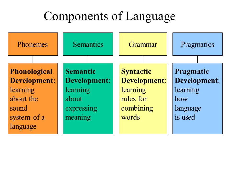 Components of Language Phonemes Phonological Development: learning about the sound system of a language Semantics Semantic Development: learning about expressing meaning Grammar Syntactic Development: learning rules for combining words Pragmatics Pragmatic Development: learning how language is used