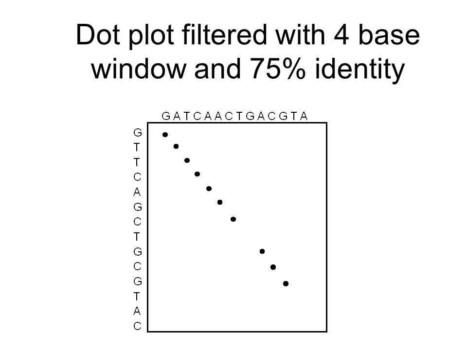 Dot plot filtered with 4 base window and 75% identity
