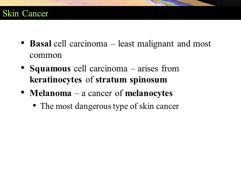 Skin Cancer Basal cell carcinoma – least malignant and most common Squamous cell carcinoma – arises from keratinocytes of stratum spinosum Melanoma – a cancer of melanocytes The most dangerous type of skin cancer
