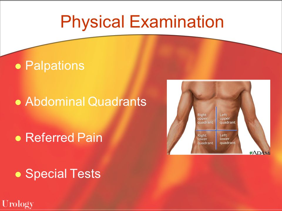 Physical Examination Palpations Abdominal Quadrants Referred Pain Special Tests