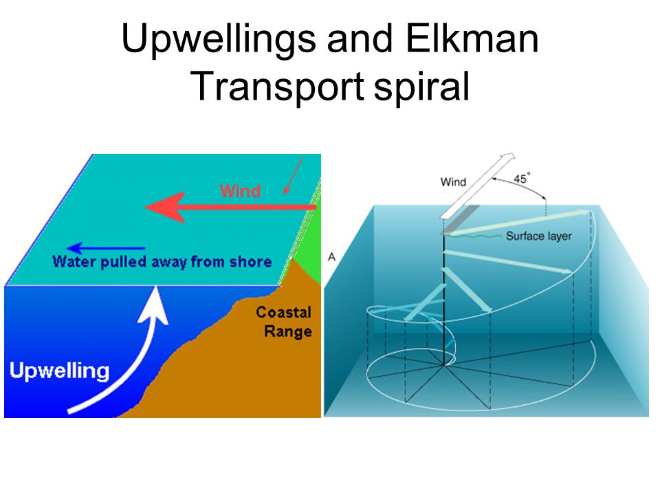Upwellings and Elkman Transport spiral