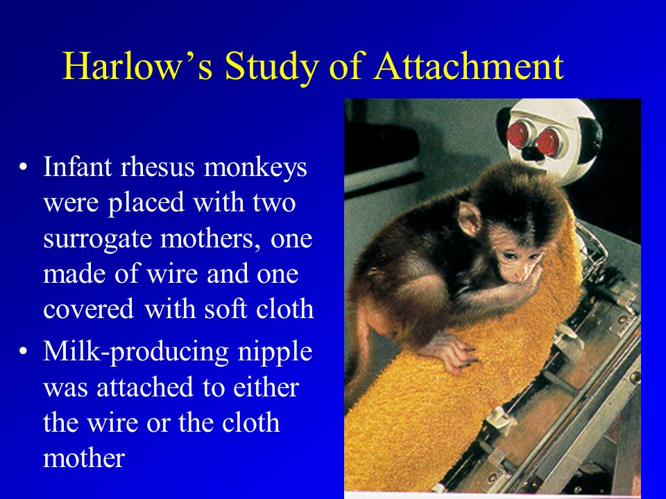 Harlow's Study of Attachment Infant rhesus monkeys were placed with two surrogate mothers, one made of wire and one covered with soft cloth Milk-producing nipple was attached to either the wire or the cloth mother