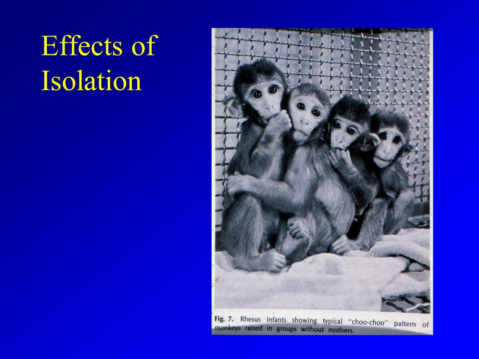 Effects of Isolation