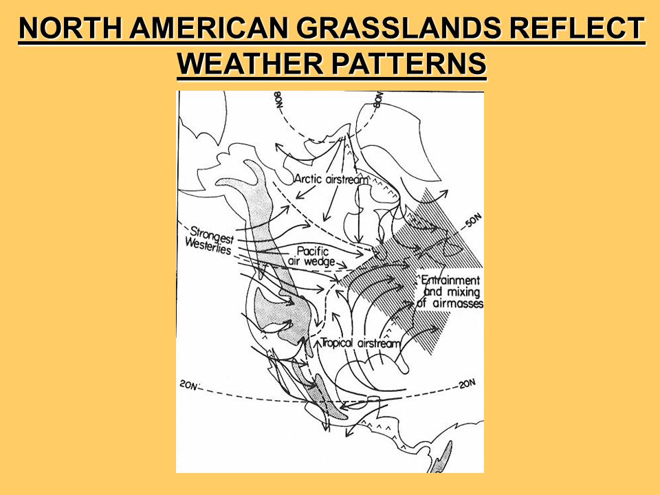 NORTH AMERICAN GRASSLANDS REFLECT WEATHER PATTERNS