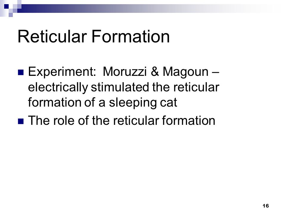 16 Reticular Formation Experiment: Moruzzi & Magoun – electrically stimulated the reticular formation of a sleeping cat The role of the reticular formation