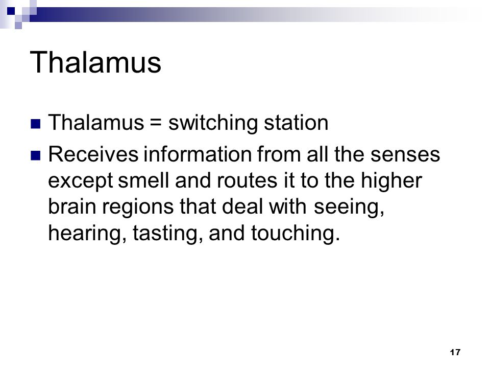 17 Thalamus Thalamus = switching station Receives information from all the senses except smell and routes it to the higher brain regions that deal with seeing, hearing, tasting, and touching.
