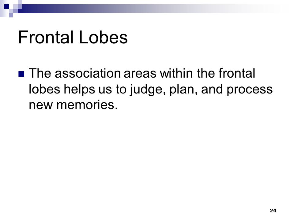 24 Frontal Lobes The association areas within the frontal lobes helps us to judge, plan, and process new memories.