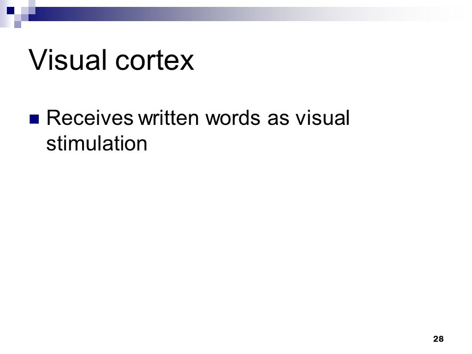 28 Visual cortex Receives written words as visual stimulation