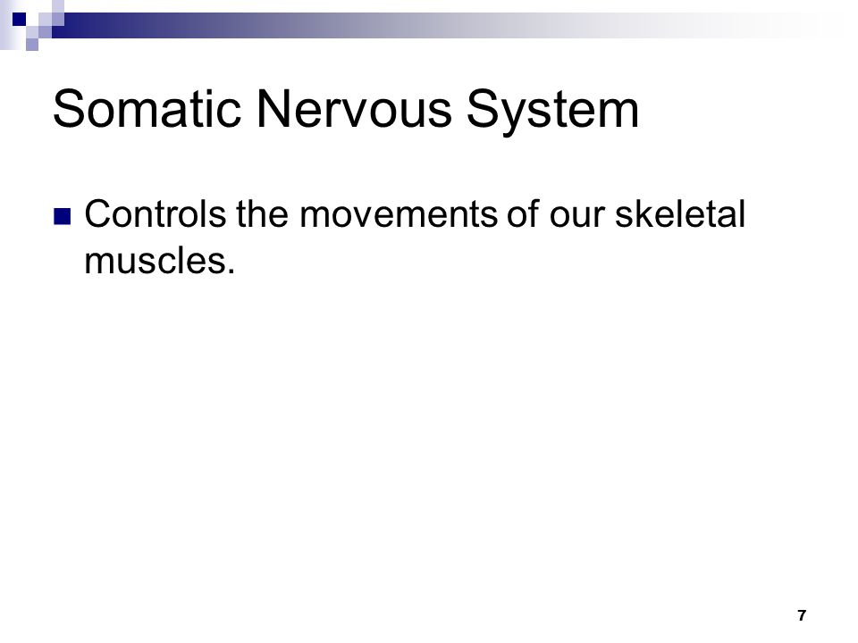 7 Somatic Nervous System Controls the movements of our skeletal muscles.