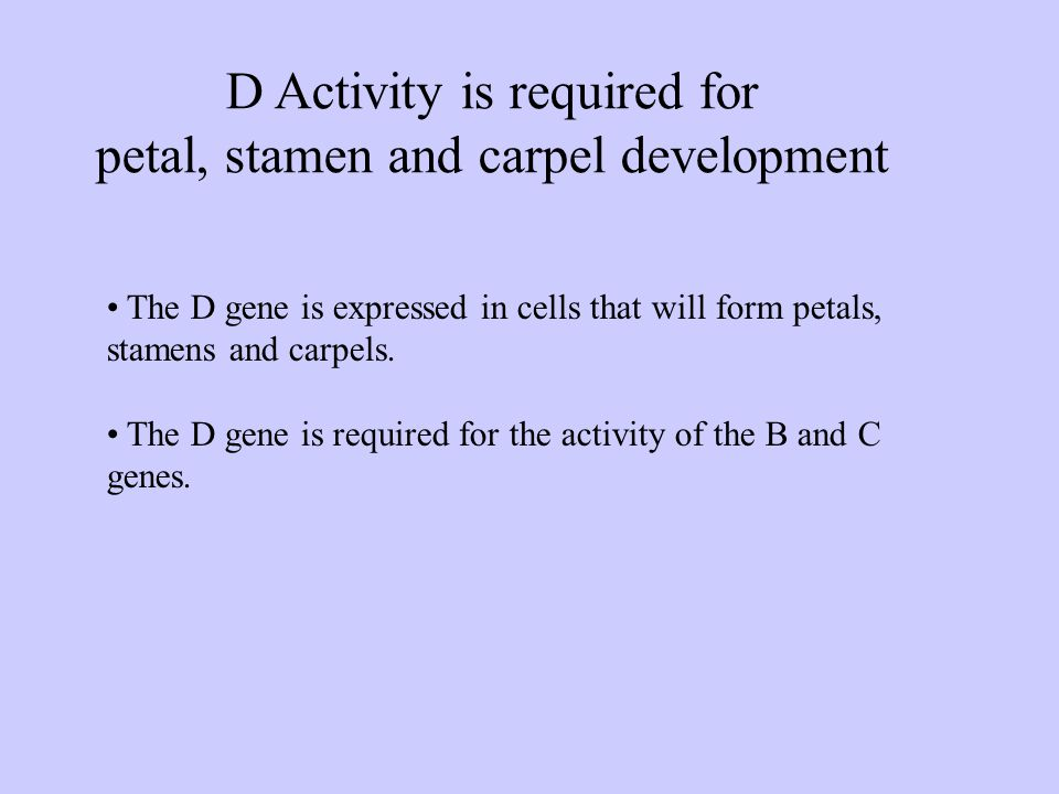 D Activity is required for petal, stamen and carpel development The D gene is expressed in cells that will form petals, stamens and carpels.