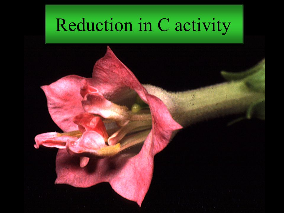 Reduction in C activity