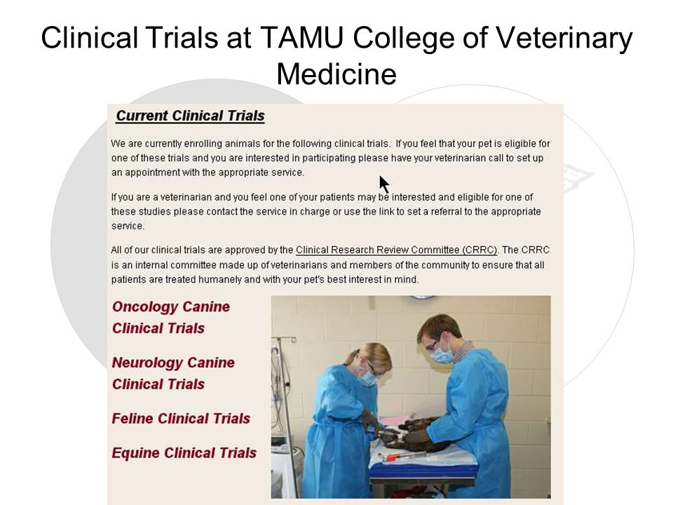 Clinical Trials at TAMU College of Veterinary Medicine