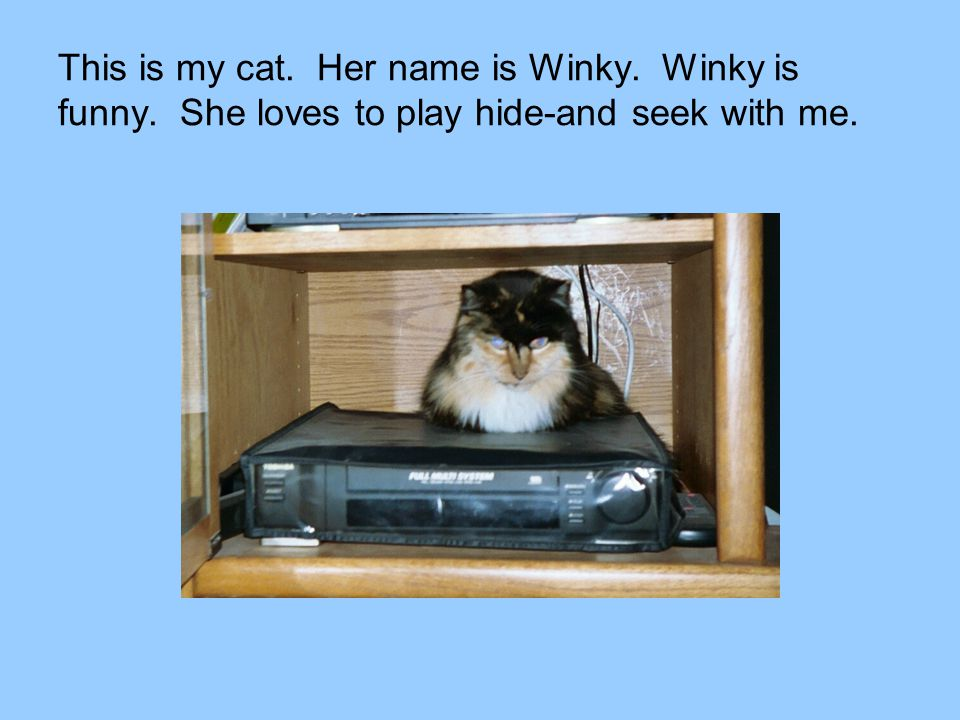 This is my cat. Her name is Winky. Winky is funny. She loves to play hide-and seek with me.