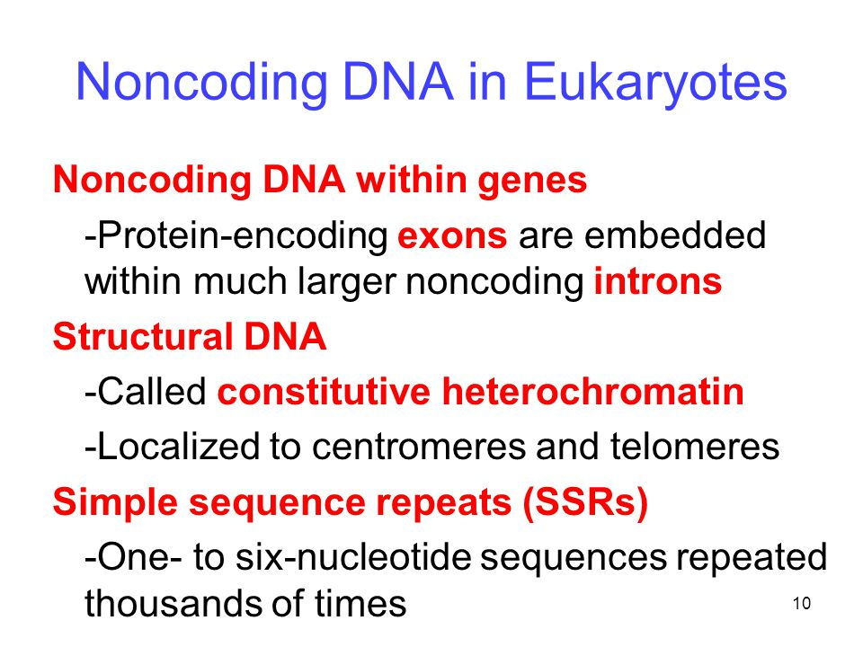 10 Noncoding DNA in Eukaryotes Noncoding DNA within genes -Protein-encoding exons are embedded within much larger noncoding introns Structural DNA -Called constitutive heterochromatin -Localized to centromeres and telomeres Simple sequence repeats (SSRs) -One- to six-nucleotide sequences repeated thousands of times