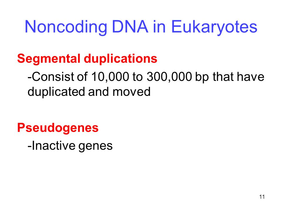 11 Noncoding DNA in Eukaryotes Segmental duplications -Consist of 10,000 to 300,000 bp that have duplicated and moved Pseudogenes -Inactive genes