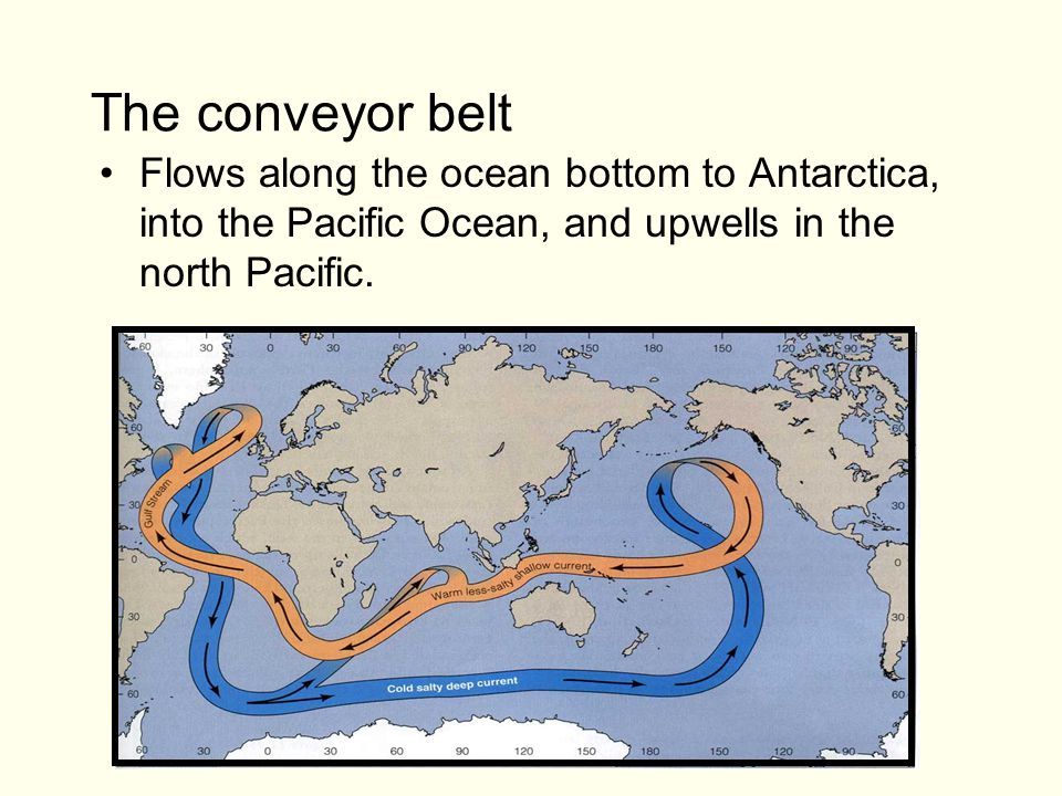 The conveyor belt Flows along the ocean bottom to Antarctica, into the Pacific Ocean, and upwells in the north Pacific.
