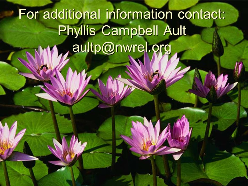 For additional information contact: Phyllis Campbell Ault