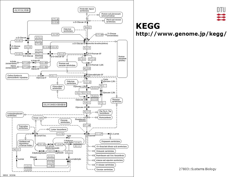 27803::Systems Biology17CBS, Department of Systems Biology KEGG