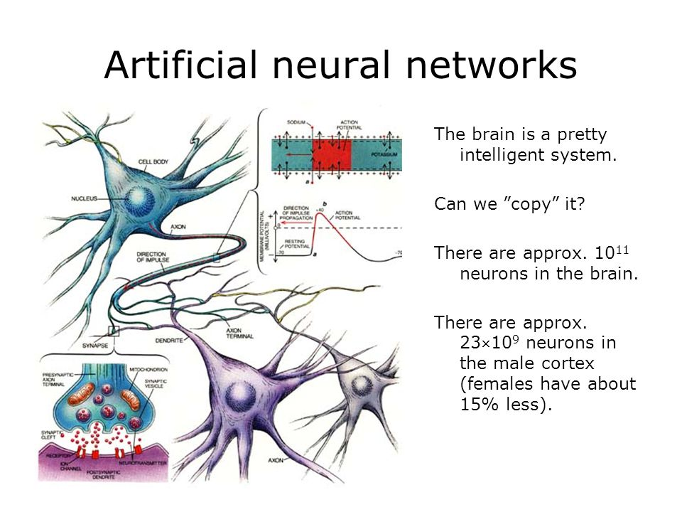 Artificial neural networks The brain is a pretty intelligent system.