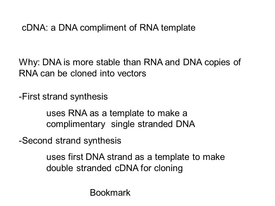 cDNA: a DNA compliment of RNA template Why: DNA is more stable than RNA and DNA copies of RNA can be cloned into vectors -First strand synthesis uses RNA as a template to make a complimentary single stranded DNA -Second strand synthesis uses first DNA strand as a template to make double stranded cDNA for cloning Bookmark