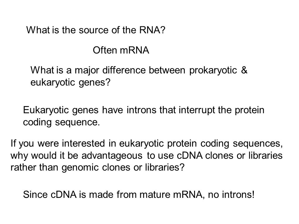 What is the source of the RNA.