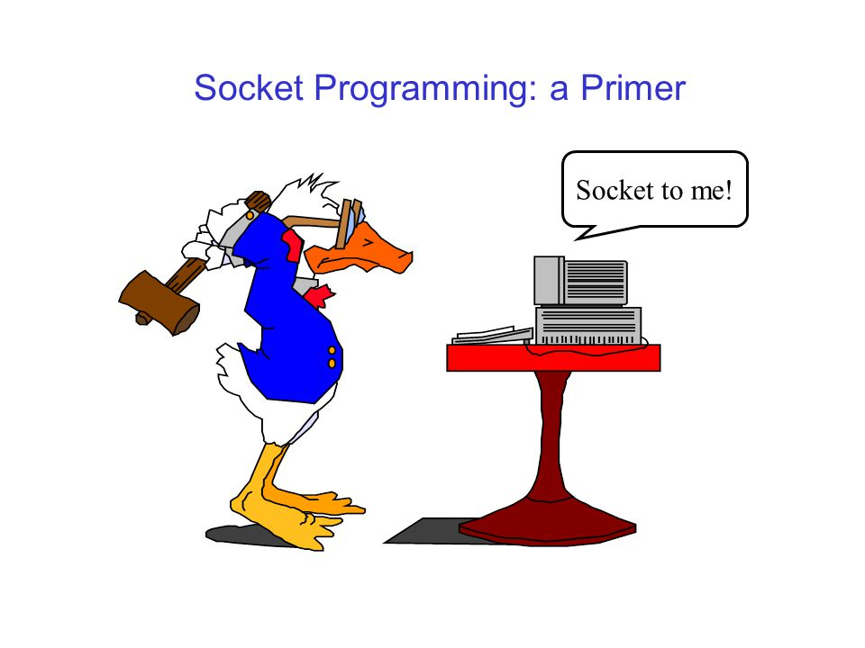 Socket Programming: a Primer Socket to me!