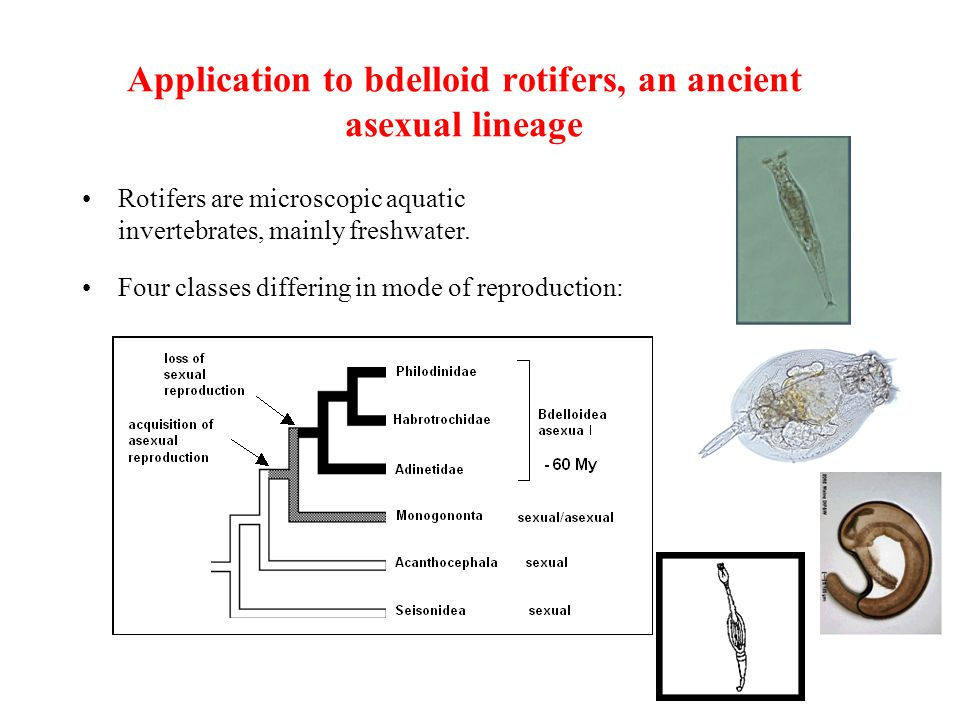 Phylogenetic species concept asexual reproduction