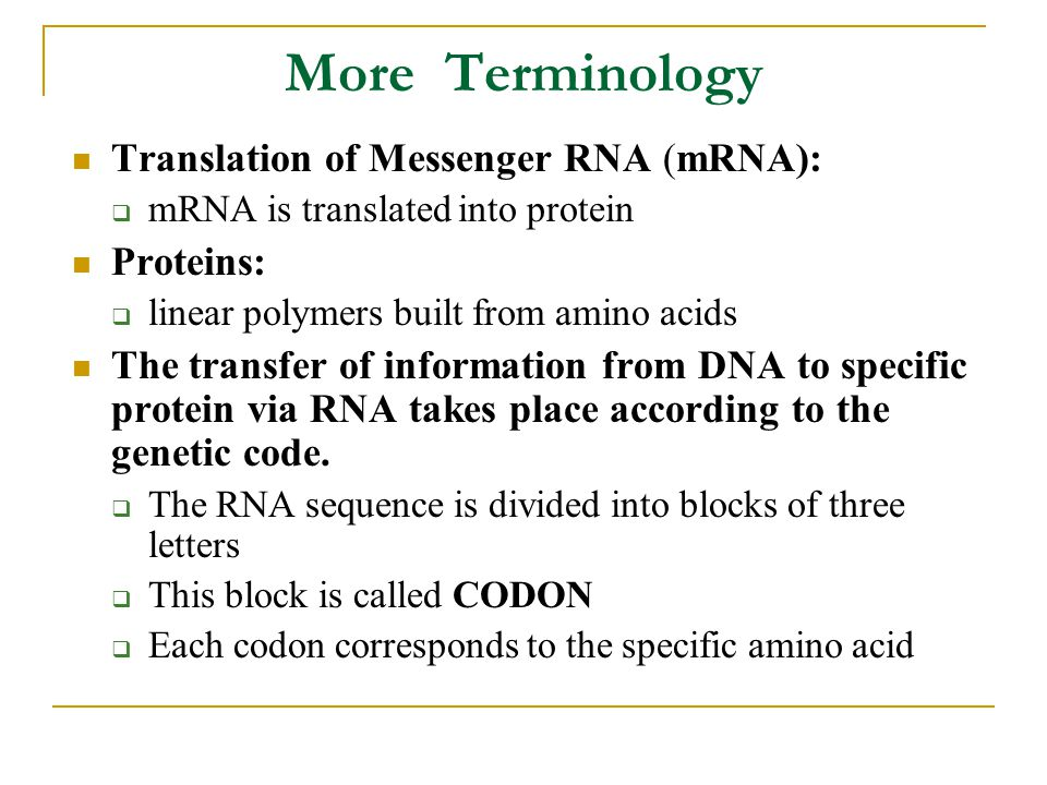 More Terminology Translation of Messenger RNA (mRNA):  mRNA is translated into protein Proteins:  linear polymers built from amino acids The transfer of information from DNA to specific protein via RNA takes place according to the genetic code.