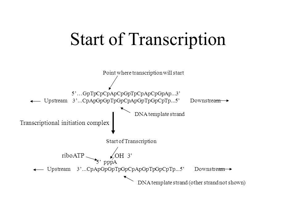 Start of transcription 5 pppa upstream 3 1 start maxwellsz