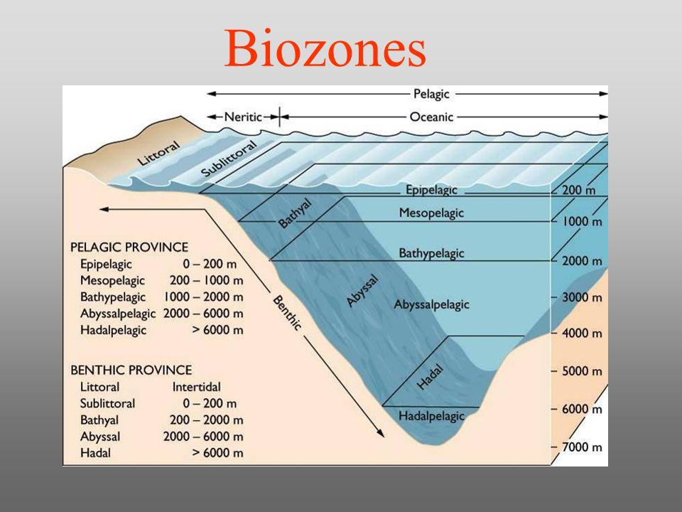 Ocean Ecosystem Goal To Understand The Factors Both Biotic And