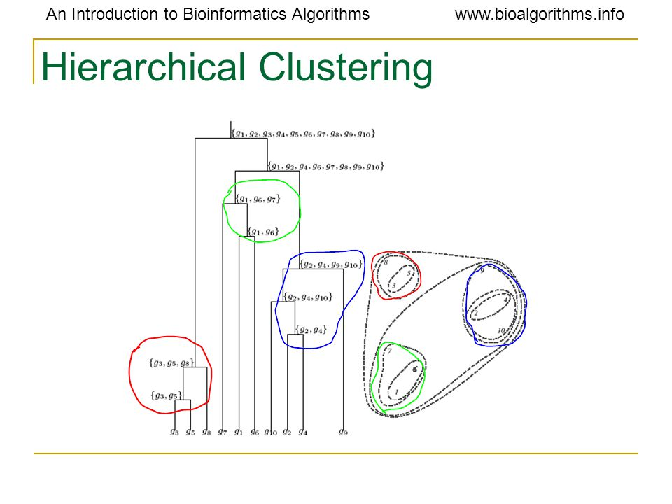 An Introduction to Bioinformatics Algorithmswww.bioalgorithms.info Hierarchical Clustering