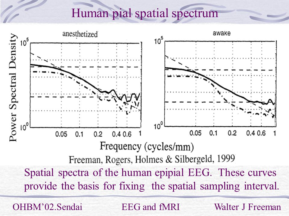 Human pial spatial spectrum OHBM'02.Sendai EEG and fMRI Walter J Freeman Spatial spectra of the human epipial EEG.
