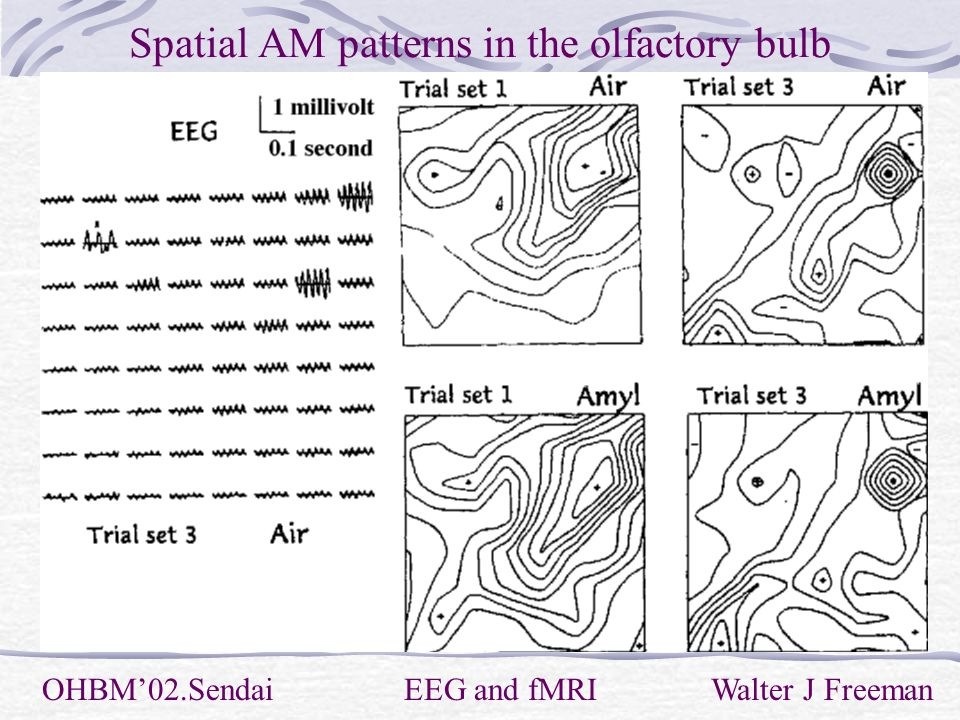 Spatial AM patterns in the olfactory bulb OHBM'02.Sendai EEG and fMRI Walter J Freeman