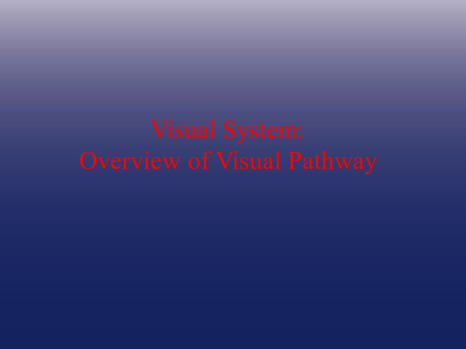 Visual System: Overview of Visual Pathway