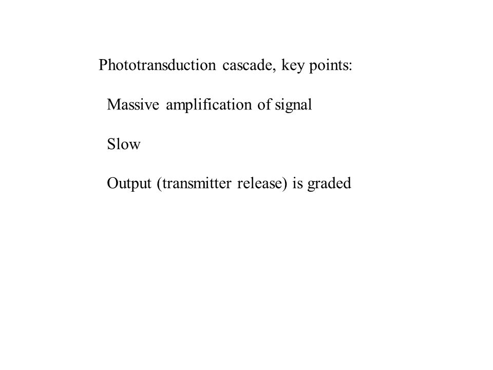 Phototransduction cascade, key points: Massive amplification of signal Slow Output (transmitter release) is graded