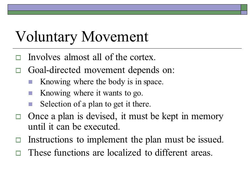 Voluntary Movement  Involves almost all of the cortex.