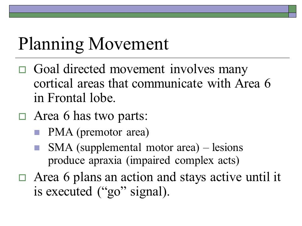 Planning Movement  Goal directed movement involves many cortical areas that communicate with Area 6 in Frontal lobe.