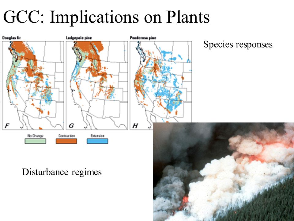 GCC: Implications on Plants Species responses Disturbance regimes