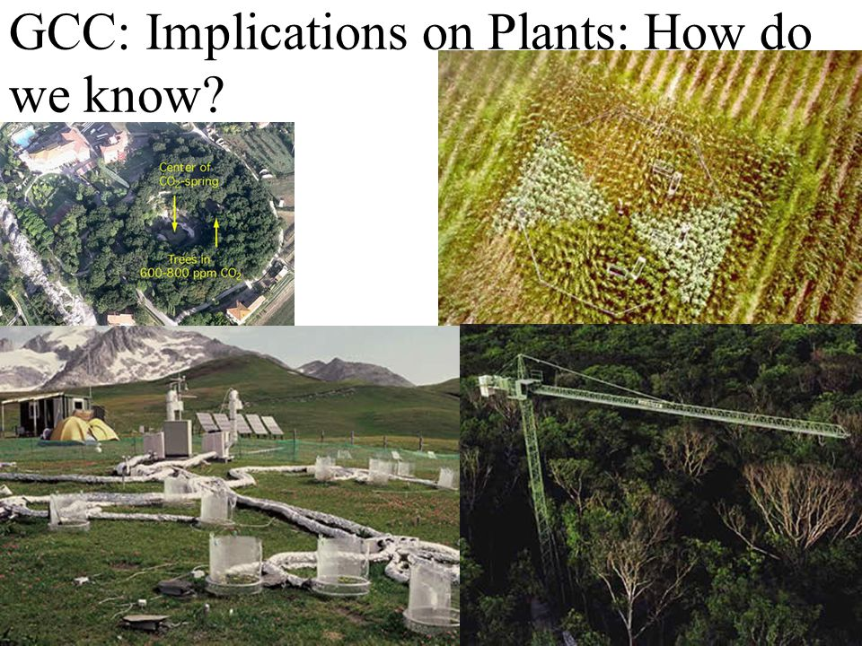 GCC: Implications on Plants: How do we know
