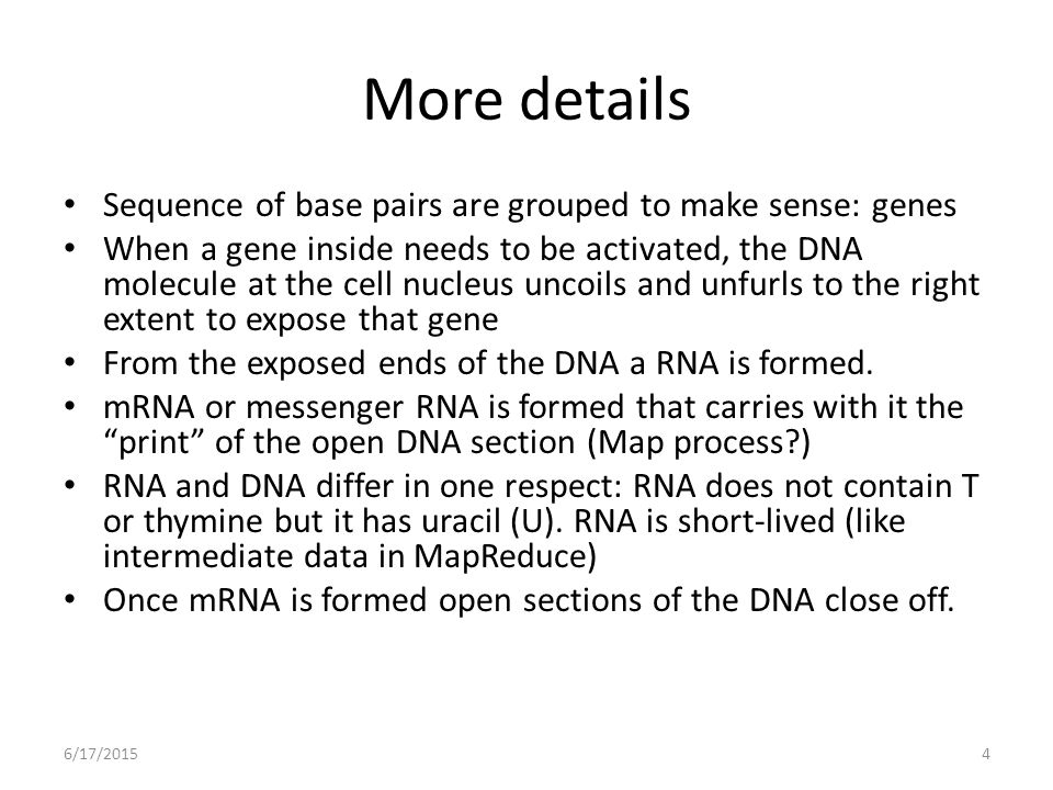 More details Sequence of base pairs are grouped to make sense: genes When a gene inside needs to be activated, the DNA molecule at the cell nucleus uncoils and unfurls to the right extent to expose that gene From the exposed ends of the DNA a RNA is formed.